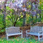 As the Fall Foliage Floats to the Ground….